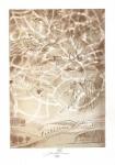 Kavan Jan, litografie, Ptáci
